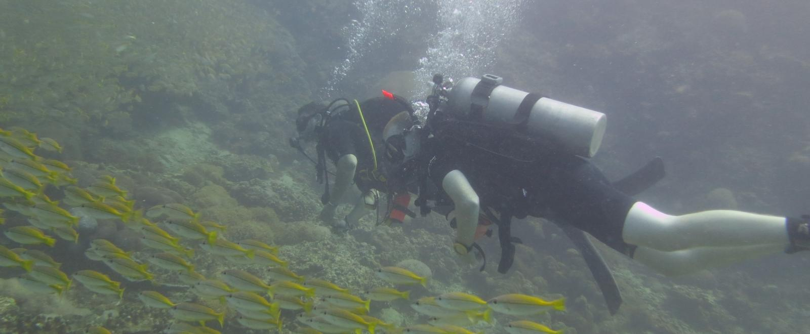 A projects Abroad volunteer swimming with fishes whilst on a diving and marine conservation volunteering project.